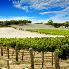 Vineyards and agricultural domains...